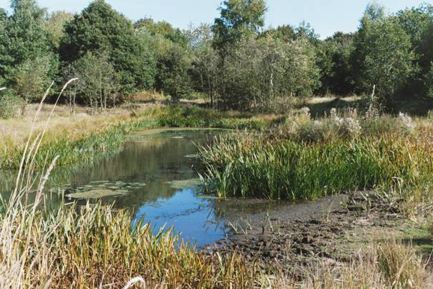 Photograph of a wildlife breeding pond on the river island