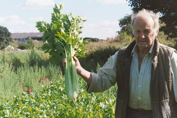 Photographs of allotment crops
