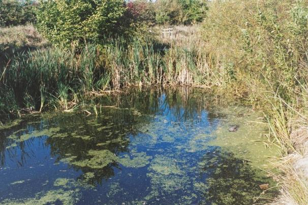 Photograph of a children's dipping pond on the Nature Reserve